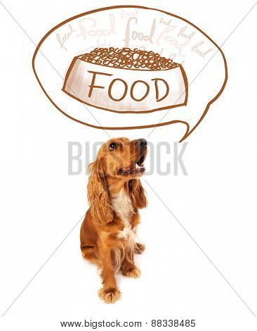 Cute cocker spaniel thinking about a bowl of food in a thought bubble above her head
