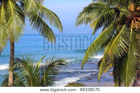 beautiful blue sea landscape with palm leaves on foreground