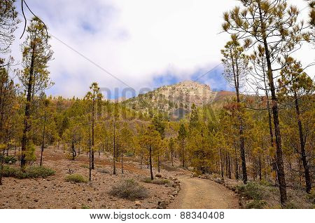 Scenic Footpath In The Forest