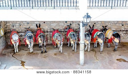 Famous Donkey Taxi. A Major Attraction For Visitors In Mijas, Andalusian Town On The Costa Del Sol.