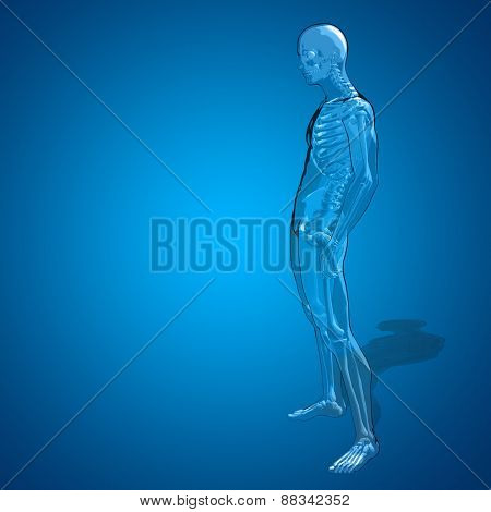 Concept or conceptual 3D human man or male skeleton pain or ache anatomy transparent body, blue background