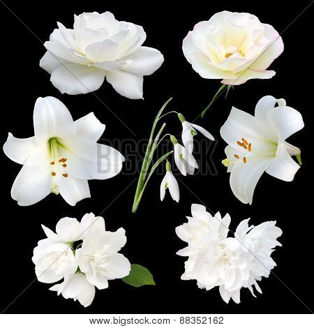 Collection of white flowers