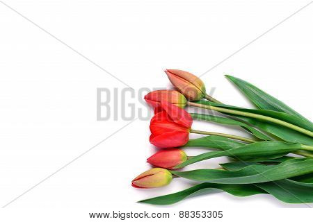 Bouquet Of Red Tulips Isolated On White Background