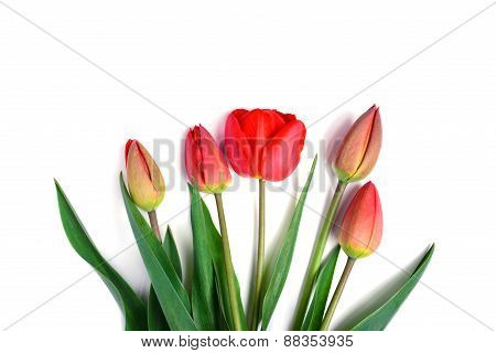 Bunch Of Red Tulips Bouquet Isolated On White Background
