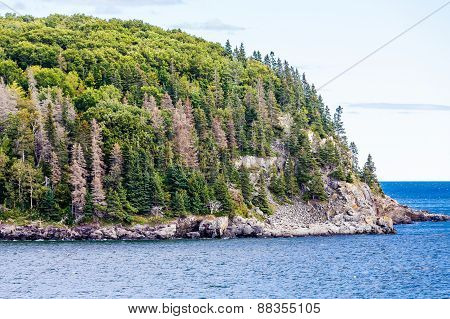 Evergreen Trees On Steep Rocky Coast