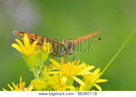 An orange and black butterfly on a flower.