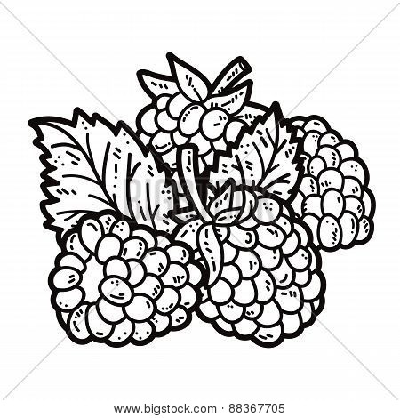 Blackberries outlines