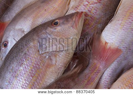 Red Snapper Exposed On The Market