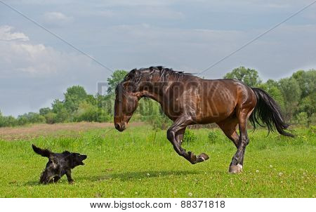 horse with the dog