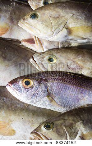 background fish