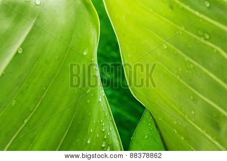 Frame  Leaves  With Dew Drops
