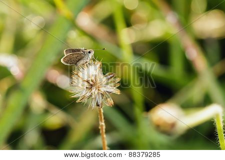 Butterfly On Flower Grass With Dew.