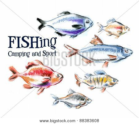 fresh fish and seafood on white background