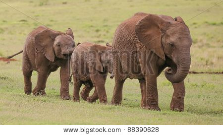 Young African Elephant Friends