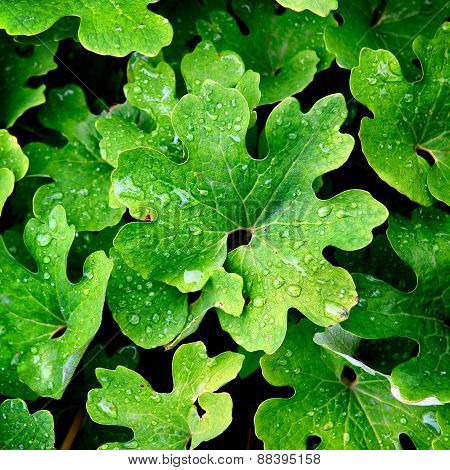 Green Leaves With Waterdrops