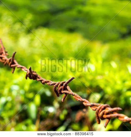 Protection Concept Of Steel Barbed Wire On Rural Green Background, Closeup