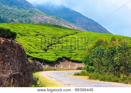 Green Tea Plantations With Road And Clouds In The Morning, Munnar, Kerala, Beautiful India Travel Ba