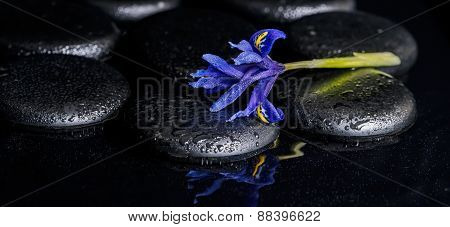 Beautiful Spa Concept Of Blooming Iris Flower And Black Zen Stones On Ripple Reflection Water, Panor