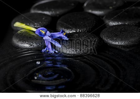 Beautiful Spa Concept Of Iris Flower And Black Zen Stones On Ripple Reflection Water, Closeup