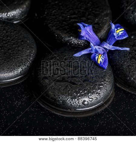 Beautiful Spa Concept Of Blossoming Iris Flower And Black Zen Stones On Water, Closeup