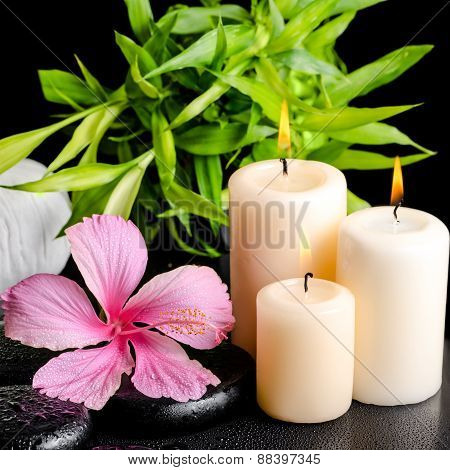 Spa Still Life Of Pink Hibiscus Flower, Twig Bamboo, Thai Herbal Compress Balls And Candles On Zen B