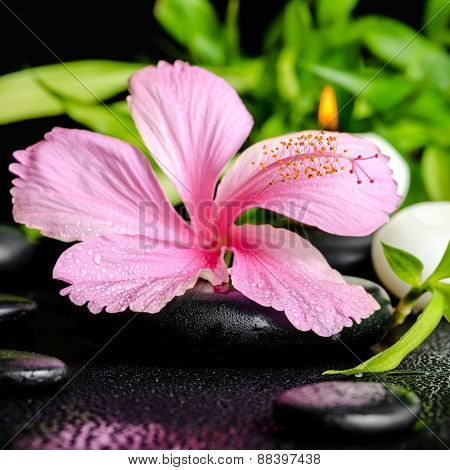 Beautiful Spa Still Life Of Pink Hibiscus Flower, Twig Bamboo And White Candles On Zen Basalt Stones
