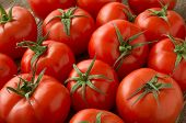 stock photo of food groups  - red tomatoes background - JPG