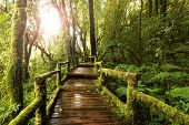 stock photo of rainforest  - Beautiful wooden walkway through in deep rainforest - JPG