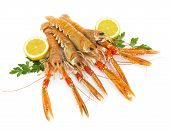 pic of crustaceans  - Nephrops crustacean isolated on a white background - JPG