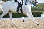image of saddle-horse  - Closeups of a competition of dressage horses in Spain - JPG