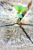 picture of decomposition  - Seedling growing in a timber Focus on seeding - JPG