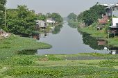 stock photo of water pollution  - Many water hyacinth in canal made water pollution - JPG
