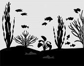 stock photo of algae  - Silhouettes of fishes and algae in aquarium - JPG