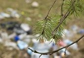stock photo of pine-needle  - Pine tree needles in focus and rubbish in the blurred background concept of ecological disaster - JPG