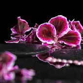 pic of geranium  - beautiful spa background of blooming dark purple geranium flower and beads on reflection dark water closeup - JPG
