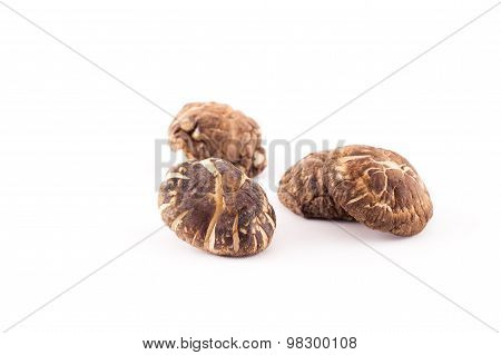 Shiitake mushroom on the White background.