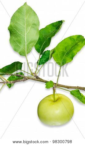 Yellow Apple On A Branch With Leaves On A Light Background