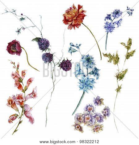 Set of watercolor wildflowers, sprigs leaves separately flower
