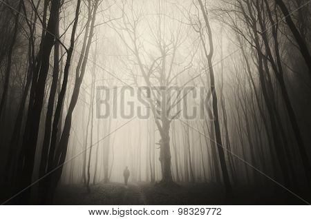 Dark woods with man silhouette on path