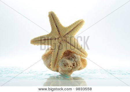 Starfish & Shell Rock