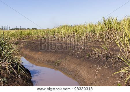 Farm Water Crops