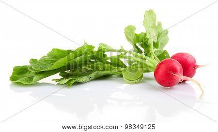 Fresh red radish isolated on white