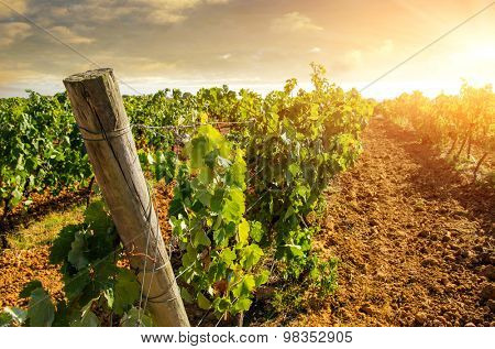 Landscape of countryside with vineyard at sunset light