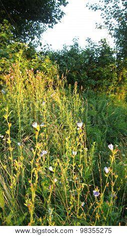 Evening Lawn