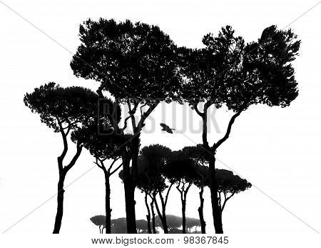 A bird between the trees