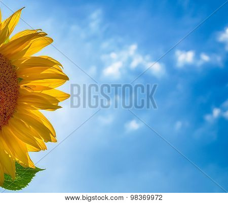 sunflower petals and blurred cloudy blue sky
