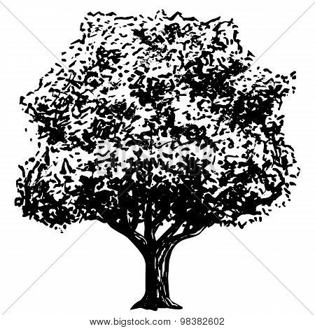 Ink Drawing Of Tree Isolated On White Background