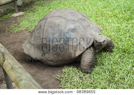 Beautiful Turtle In Its Enclosure