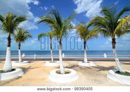 Palm Trees At Sea Embankment Along Pathway For Running - Beautiful Tropical Background