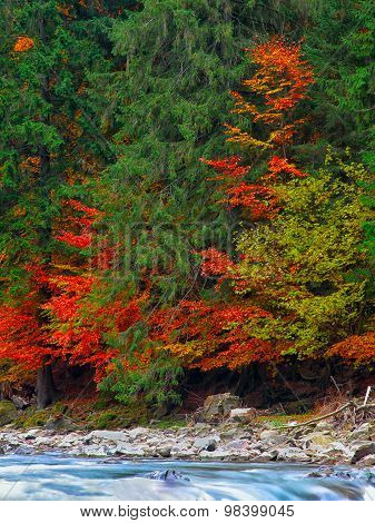 Colourfull Forest In Mountains